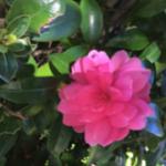 スクリーンショット-2015-10-26-5.55.07.png