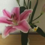 スクリーンショット-2015-12-29-20.25.18.png