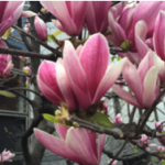 スクリーンショット-2016-04-03-22.52.31.png