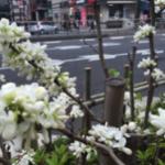 スクリーンショット-2016-04-16-0.44.14.png